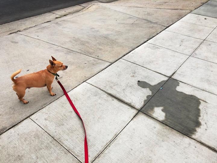 I'm a better dog than mydogs.