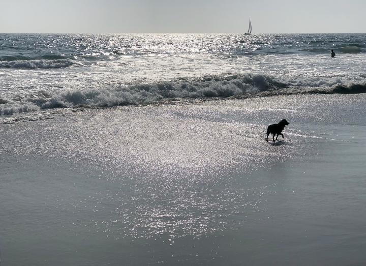 Beach Day Valentine